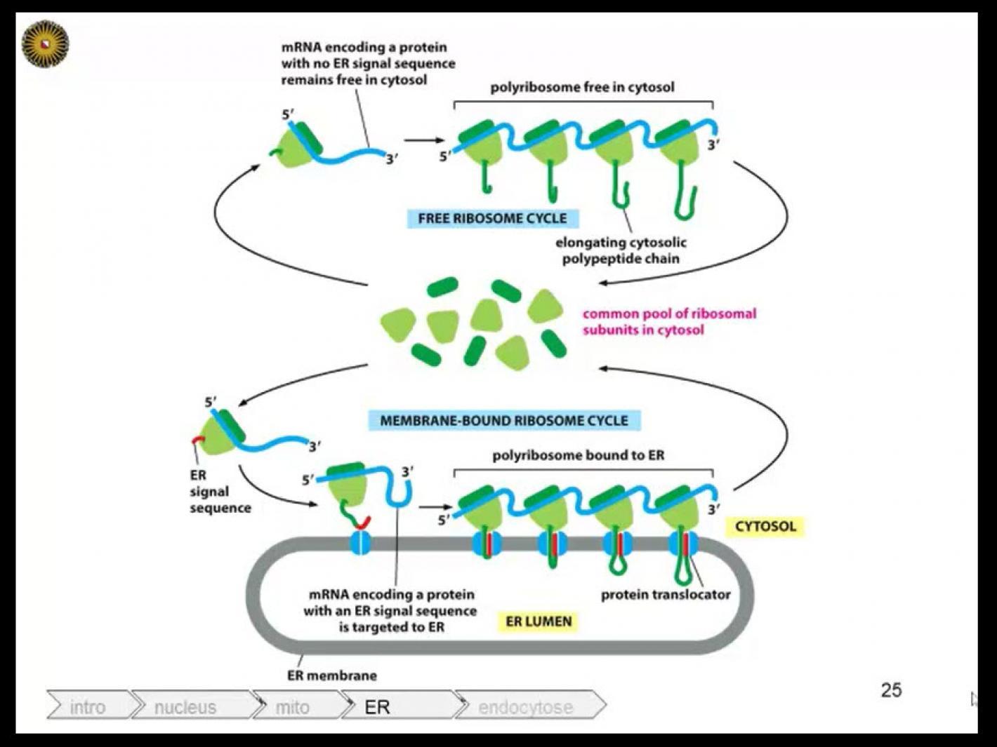 Celbiologie
